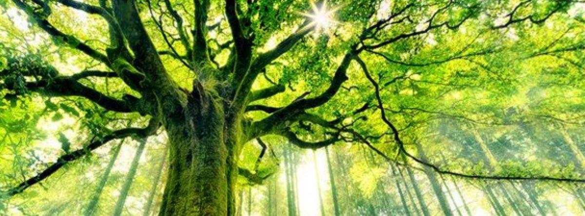 arbre PEV