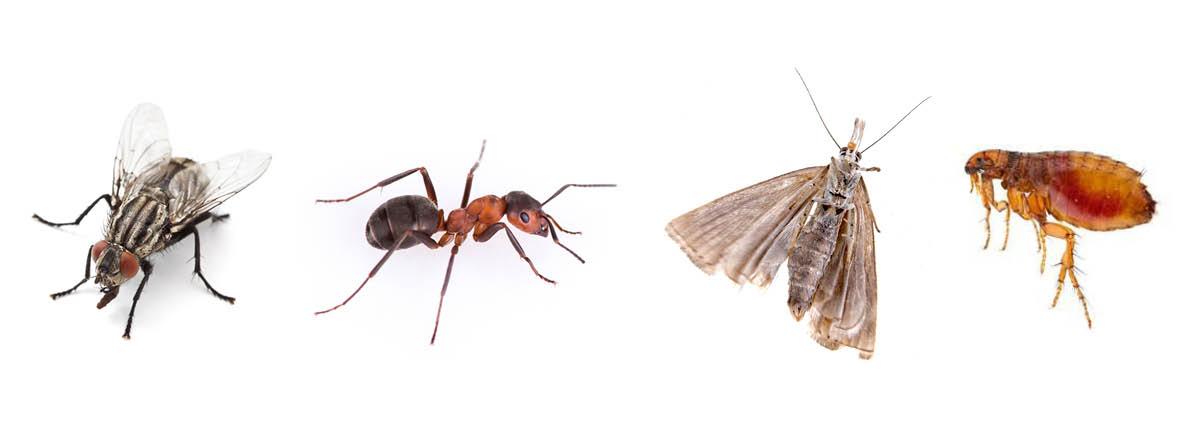 Désinsectisation : autres insectes